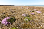 a9w_hassensteinbukta_02aug15_143