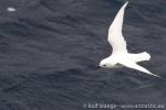 c6_amundsen-sea_21jan15_14