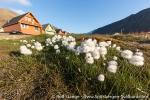 270717_longyearbyen_62