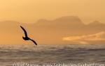 f9y_Denmark-Strait_13Sept13_39