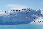 Antarktis Adélie pinguins »on the rocks«, Weddell Sea, Antarctica