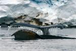 Humpback whales, Antarctic peninsula