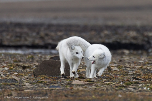 Spitsbergen - East