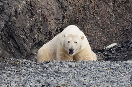 Day 1-6<br  />(Longyearbyen-Woodfjord)