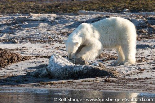 Gallery 2:Nordaustland – Spitsbergen 2018