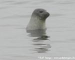 https://www.spitsbergen-svalbard.com/spitsbergen-information/wildlife/harbour-seal.html