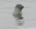 https://www.spitsbergen-svalbard.com/?page_id=25117