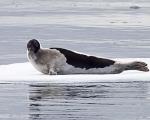 https://www.spitsbergen-svalbard.com/?page_id=25096