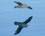 https://www.spitsbergen-svalbard.com/spitsbergen-information/fauna/northern-fulmar.html