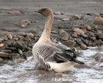 https://www.spitsbergen-svalbard.com/?page_id=25071
