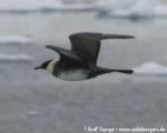 https://www.spitsbergen-svalbard.com/?page_id=25131