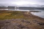 Edgeøya: Andréetangen