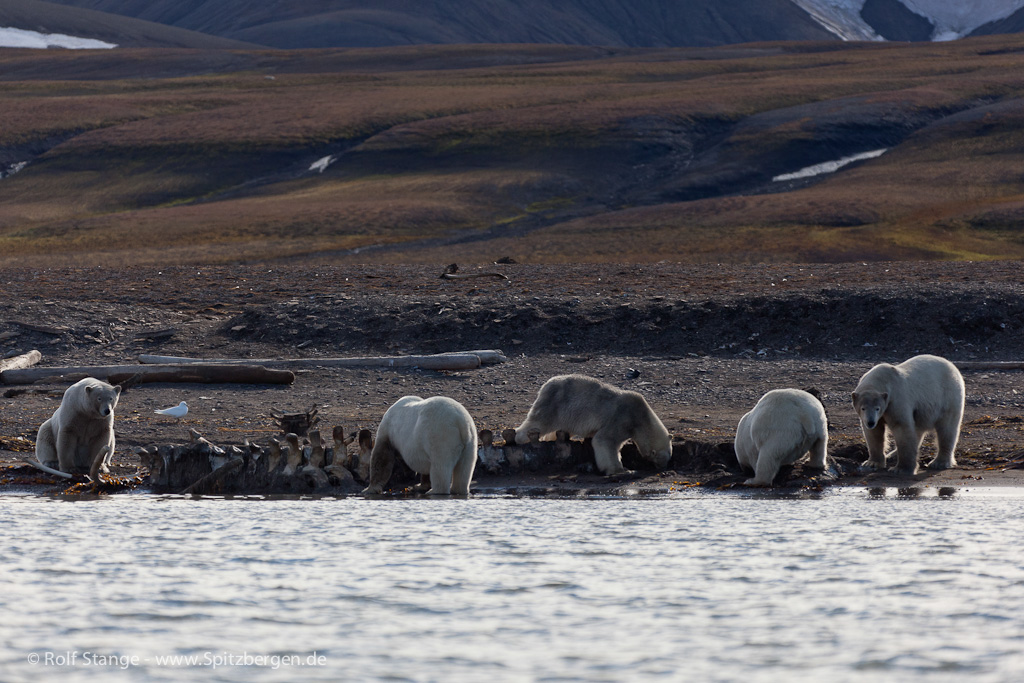 Spitzbergen 2011