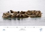 rz-spitzbergen-kalender-2017-a5-07