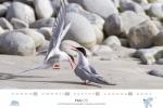 spitzbergen-kalender-2018-a3-06