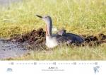 rz-spitzbergen-kalender-2019-a3-07