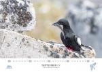 rz-spitzbergen-kalender-2019-a3-10