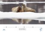 rz-spitzbergen-kalender-2019-a3-12