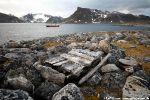 a5_Ytre-Norskoya_14Sept08_109
