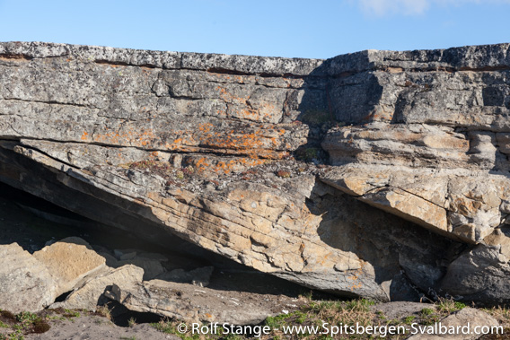 Festningen-sandstone at Boltodden, Kvalvågen