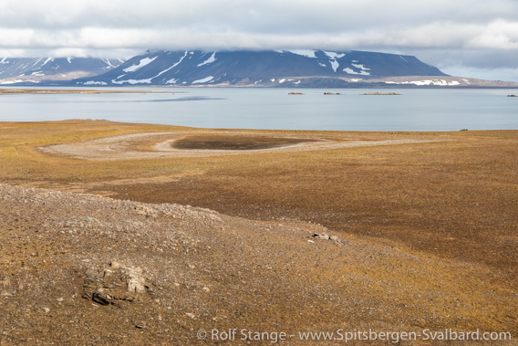 Tokrossøya tundra
